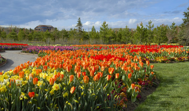 Spring has Sprung! The Tulip Festival has Officially Begun!